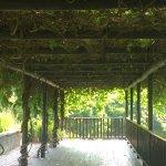 Vine veiled deck near Wood's Cycad & Fish Pond
