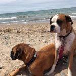 Yay for a dog friendly beach!