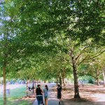 Strolling through the park