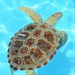 Photo de The Turtle Hospital