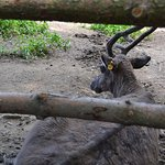Photo of Olomouc Zoo