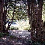 Myrtle trees at campground