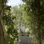 A secret garden at Arbor Guest House, Napa, CA