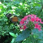 Cokrell Butterfly Center
