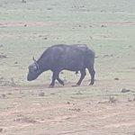 Photo de Gorah Elephant Camp