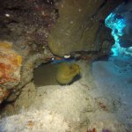 Green Moray Eel (photo by Peter @ Sharky's Crew)