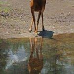 Deer at Mirror Lake