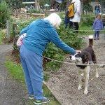 Sled Dog Demonstration Foto