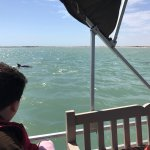 Photo de South Padre Island Dolphin Research & Sea Life Nature Center