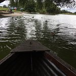 Rowing boat, duck on boating lake