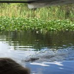 Photo de Everglades Holiday Park