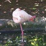Photo of Parco Gallorose