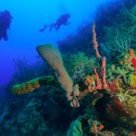 Diving the reef near St. George's Caye