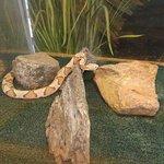 snake in tank