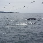 Photo of Princess Monterey Whale Watching
