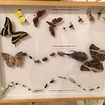 part of the insect display