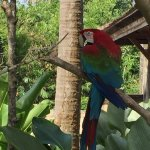 Photo of Bali Bird Park