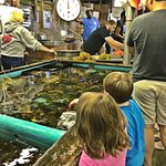 Picking our lobsters