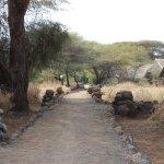 Kibo Safari Camp Foto