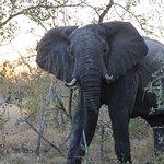 Photo de andBeyond Ngala Safari Lodge
