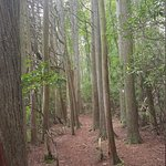 Wells Mills County Park