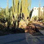 Cactus displayed
