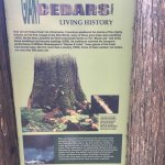 Photo of Giant Cedars Boardwalk Trail