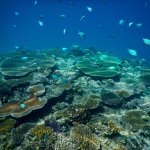 snorkelling every day, beautiful coral, shipwreck reef
