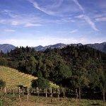 Photo of Southbridge Napa Valley