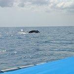 Photo of Spanish Dancer Divers