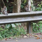 by the road side in Bukit Timah