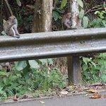 MacRitchie Nature Trail Foto