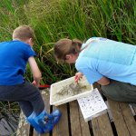 Snails, leeches, pond skaters and more