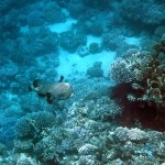 Photo of Elphinstone Reef