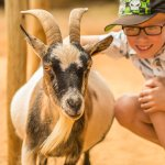 The Masai section has a great selection of Goats (which can be fed) and other pet-able animals.