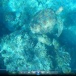 Turtle_large.jpg