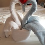 Lovely swans the cleaner left for us!