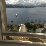 View from the room - with a feathered friend trying to get in!
