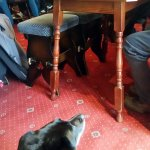 The pub's dog hung out with whoever ordered steak, which was hilarious