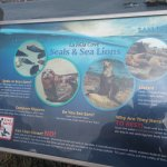 Great informative sign of seals vs. sea lions