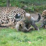 Photo de Le Parc des Felins