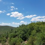 Our Arizona Skies and vegetation.