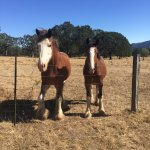 Two of the horses that reside at the ranch