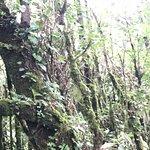 Photo of Monteverde Extremo Park