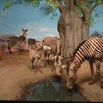 Abteilung Afrika - Zebraherde