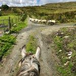 Photo of Horse Holiday Farm