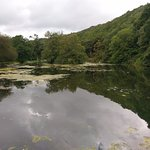 Lake with wonderful walks, including the gorgeous woods in the background. You can walk for a mi