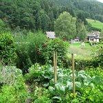 Schwarzwälder Freilichtmuseum Vogtsbauernhof Foto