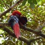 Macaw grooming