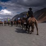 Nubra valley. Golden mountains, sand dunes and bactrian camels